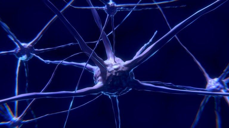 Neurônios do cérebro cochicham entre si para manter seus segredos