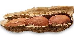 O amendoim pode influenciar no desempenho sexual?