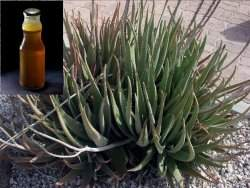 Composto de mel e babosa mostra-se eficaz contra o câncer