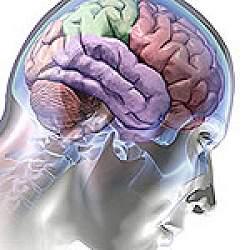 Descobertas revolucionam conhecimento do cérebro