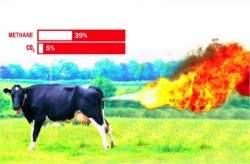 Carne cultivada em laboratório avança rumo a hambúrguer sintético