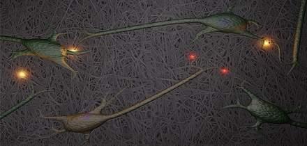 Cérebro artificial: neurônios crescem em nanocelulose