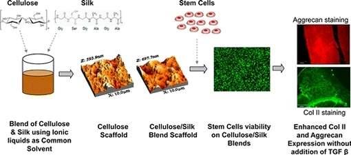 Celulose e seda ajudam a recuperar cartilagem de joelhos e quadris
