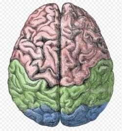Acupuntura alivia a dor alterando mecanismos bioquímicos no cérebro