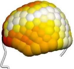 Ondas neurais questionam divisão do cérebro em áreas específicas