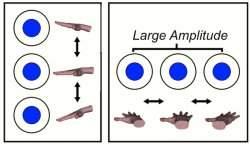 Ciência das mudrás? Gestos das mãos afetam processamento cerebral