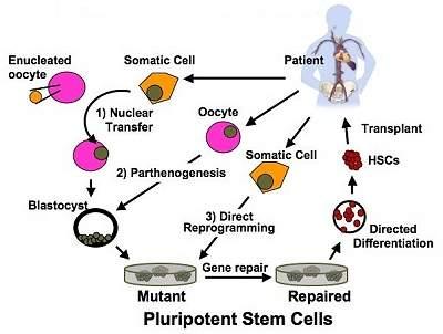 Cientistas replicam doenças em laboratório usando linhagens de células-tronco