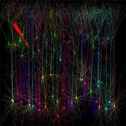 http://www.diariodasaude.com.br/news/imgs/efeito-borboleta-cerebro.jpg