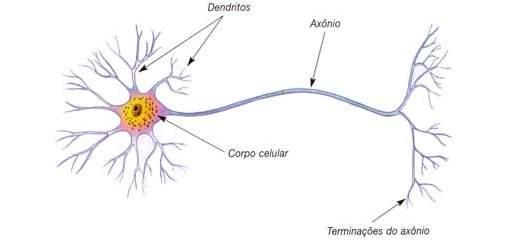 Capacidade do cérebro é muito maior do que cientistas pensavam