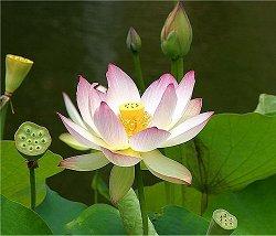 Meditação torna pessoa mais adaptativa instantaneamente