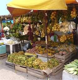 Frutos da Amazônia entrarão em campo na Copa do Mundo