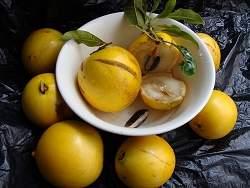 Estudo comprova propriedades funcionais de frutas do Cerrado