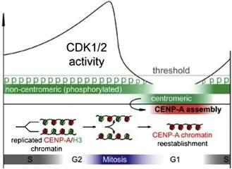 Descoberto como células herdam informação que não está nos genes