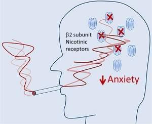 Descoberto como nicotina de cigarros alivia ansiedade de fumantes
