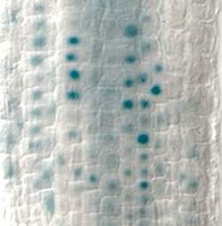 Memória epigenética é herdada sem alterar o DNA