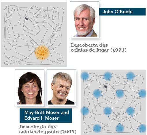 Nobel de Medicina premia descoberta do GPS do cérebro