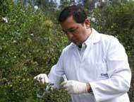 Nova espécie de levedura é descoberta na Floresta Amazônica