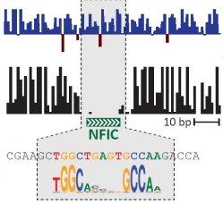 Ambiente, não genes, explicam variações imunológicas humanas