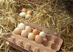 Saiba como comprar e preparar ovos para evitar contaminação