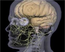 Paralisia cerebral: dos aspectos físicos à inclusão social