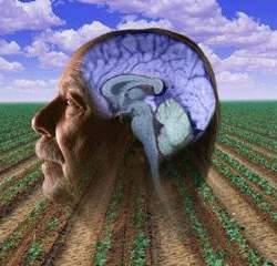 Nova provas da ligação entre pesticidas e Mal de Parkinson
