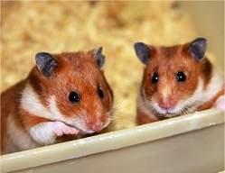 Animais nas pesquisas científicas: até quando?