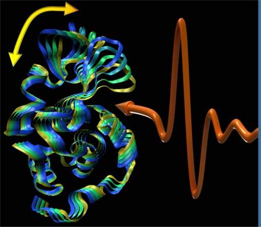 Música da vida é tocada por proteínas